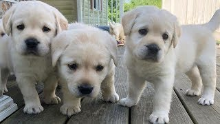 Cute And Funny Dogs And Puppies | Baby Dogs Cute And Funny Dogs | Puppies TV