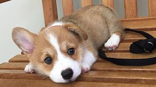 Cute Baby Dogs Doing Funny Things – Cute And Funny Puppies Videos | Puppies TV