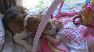 How My Cute Dogs Welcoming our Newborn Baby Every Morning | Charlie the Dog