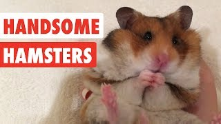 Handsome Hamsters | Funny Hamster Video Compilation 2017