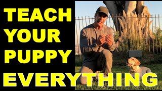 How to Train Your PUPPY to do Everything – Puppy Dog Training Video – Robert Cabral