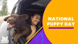 National Puppy Day | The Pet Collective