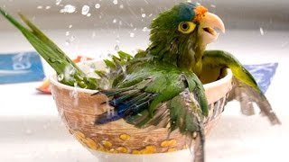 Funny Parrots – A Funny Parrot Videos Compilation 2015