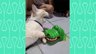 Cats vs Toy 🤖😸  Funny Cat Toy Reaction Compilation 😹😹