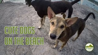 Cute dogs on the beach: Walking at sunset in Goa