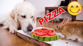 Funny Dog and Cute Rabbit Eat Pizza [WITH FUNNY COMMENTS]