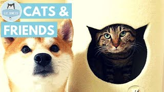 Cute Cats With Lovely Friends