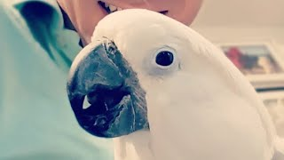 My Funny Birds-Really Short Live Stream