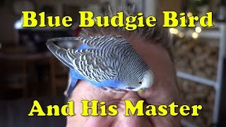 CUTE and FUNNY Blue Budgie Bird – BUDGIE BIRD WORLD