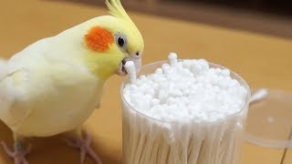 Funny Parrots Going Crazy –  Cutest Parrots Compilation 2018