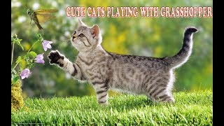 Cute cats playing with grasshopper,cute cats TV