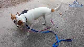 Funny Cats and Dogs Video Compilation 03