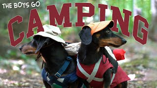 Ep 5: The Dogs Go Camping – Cute Dachshunds Camping Trip!