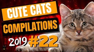Cute Cats Compilation 2019 – Funny And Cute Cats – Cutest Cats Compilation 2019 #22