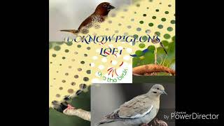 Beautiful Birds | Wildlife beautiful Birds | Save birds | Cute birds | Save environment  Save nature
