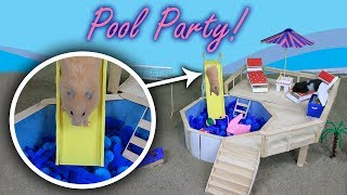 My Funny Pet Hamsters Have A Pool Party!