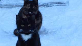 Cute cats on the snow – feral cats