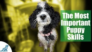 First Week Puppy Training – The 6 Skills To Teach First – Professional Dog Training Tips