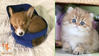 💗Aww – Cute Dog and Cat Compilation 2019💗 #5 – CuteVN