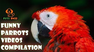 Funny Parrots Videos Compilation -Cute Parrots 2019 #3