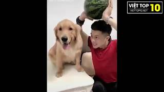 Cute Dogs and Cats Doing Funny Things 2019 | Tik Tok Animals | Try not to laugh