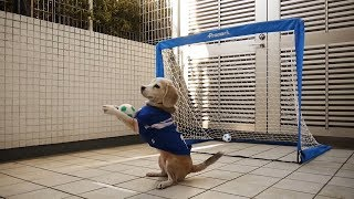 Funny Dogs Doing Sport 🏀⚽