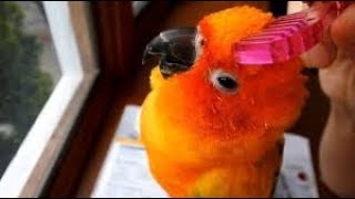 Cute Is Not Enough 🔴 Funny and Cute Parrots Videos Compilation #122