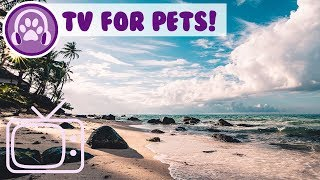TV for Pets! Entertain Your Cat, Dog Parrot, Hamster with this Fun TV!