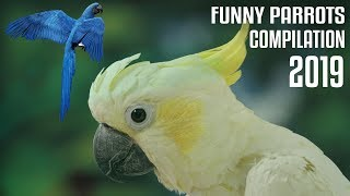 Funny Parrots Videos Compilation -Cute Parrots 2019 #2