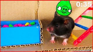 🐹  Obstacle Course for Hamster| The secret life of my hamsters