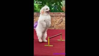 funny dogs and cats compilation # 10 try not to laugh pets