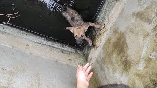 Rescue The Abandoned Puppy In The Sewage…The Call For Help From The Two Boys