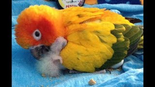 Funny Parrots Videos Compilation cute moment of the animals – Cute Parrots #14