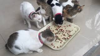 Cute cats eat food with dog, cats TV