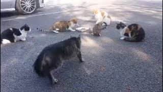 Mom cat comes to rescue her kitten from other cats