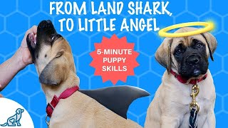 How To Train A Puppy Not To Bite Your Hands – Hand Feed Your Puppy in 5 Minutes Or Less