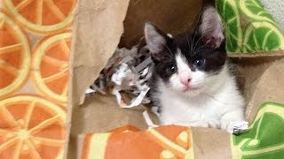How Not to Use a Cat Box! | CAF Funny Cats