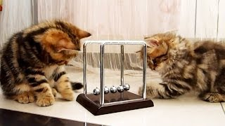 Funny Cats : How to learn physics