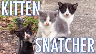 The Kitten Snatcher! – Cat Man Chris