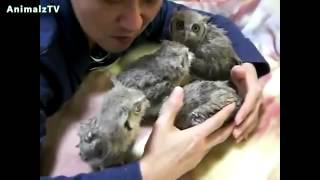 Cute Little Owls Compilation | Funny Birds | Must Watch