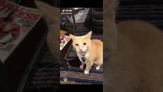 Funny cats videos…