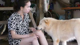 LOVELY SMART GIRL PLAYING BABY CUTE DOGS AT HOME HOW TO PLAY WITH DOG & FEED BABY DOGS #16