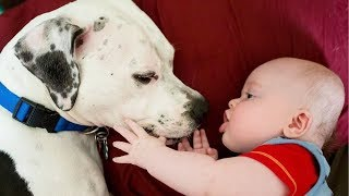 Funny Dogs And Sweet Baby Moments Compilation  – Funny Baby Videos