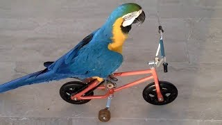 Funny Parrots Doing Funny Stuff – Cutest Parrots Compilation 2018