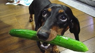 If these DOGS won't make you LAUGH, NOTHING will – FUNNY dog compilation