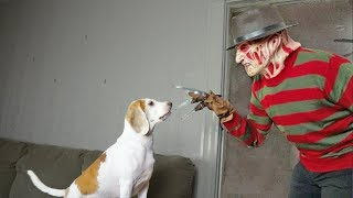 Freddy and Cute Dog are Best Friends: Cute Dog Maymo