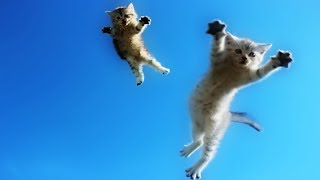 Funny Cats Jump Fail – Part 3