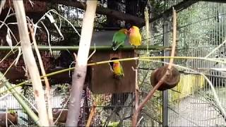 Funny and Cute Birds Loving, Teasing and Fighting