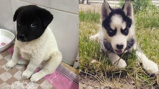 Cute Puppies Doing Funny Things Compilation – Cutest Puppies In The World 2019 | Puppies TV