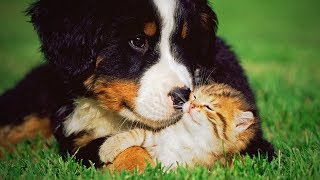 Funny Pets 🐱🐶 Funny Cats And Dogs Playing (Part 1) [Funny Pets]